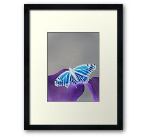 Blue and white Monarch butterfly 2 Framed Print