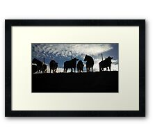 Cows Hanging Out. Framed Print