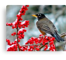 Robin Perched on Snowy Winterberry Canvas Print