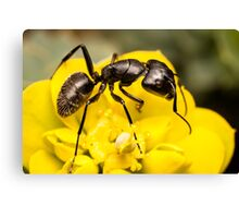 Ant close up Canvas Print