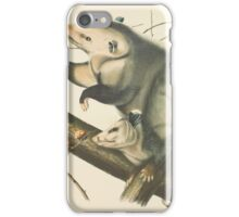 John James Audubon - Didelphis virginiana, Pennant. Virginian Opossum. Female & Young Male, 7 Months Old.   1845 iPhone Case/Skin