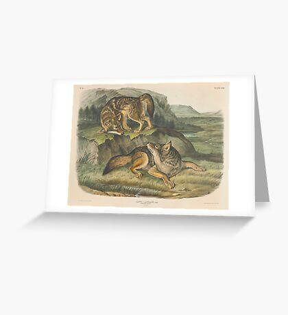 John James Audubon - Canis latrans, Say. Prairie Wolf. Males. 1-3  1845 Greeting Card