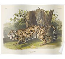 John James Audubon - Felis onca, Linn. The Jaguar. Female 1846 Poster