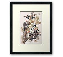 John James Audubon - Pileated Woodpecker Framed Print