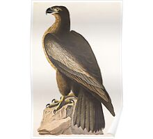 John James Audubon - The Bird of Washington, or Great American Sea Eagle. Falco washingtoniensis Male 1827 Poster