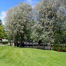 Summer Greens In Fiskars by Alan Hogan