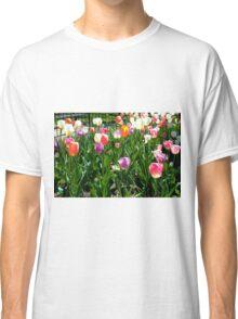Tulips Glowing in the Sun Classic T-Shirt
