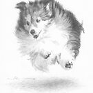running sheltie drawing by Mike Theuer