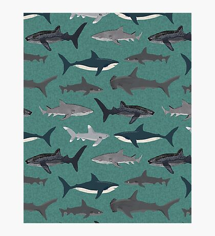 Sharks illustration art print ocean life sea life animal marine biologist kids boys gender neutral educational Andrea Lauren  Photographic Print