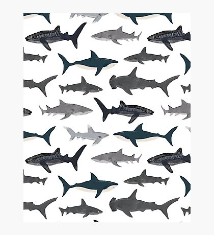 Sharks, illustration, art print ,ocean life,sea life ,animal ,marine biologist ,kids ,boys, gender neutral ,educational ,Andrea Lauren , shark week, shark, great white shark,  Photographic Print