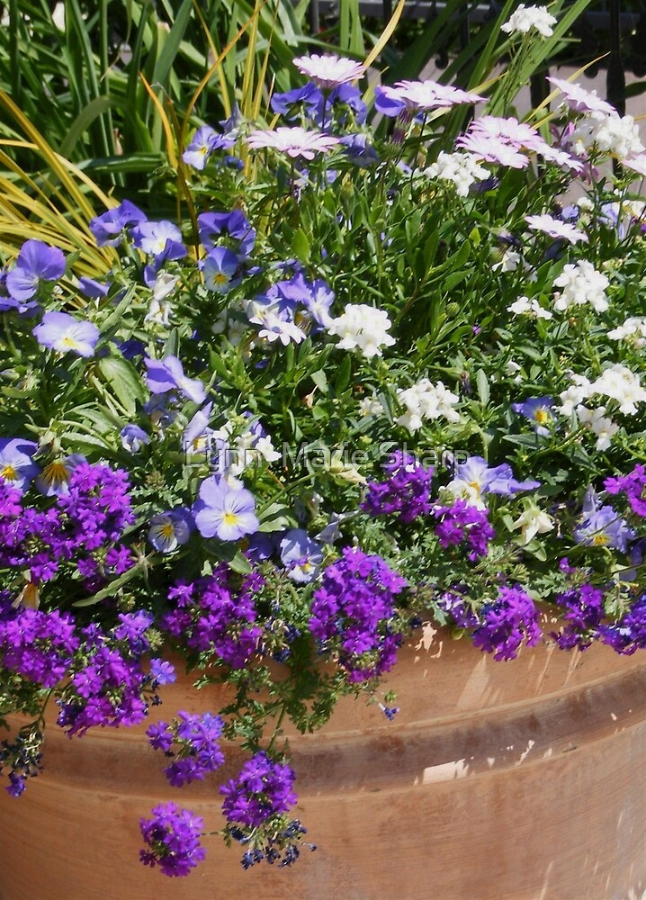 Potted Purple Flowers For Your Patio Or Garden  by Marie Sharp