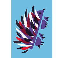 Colorful Abstract Hedgehog Photographic Print
