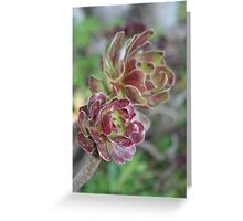 Close Up Of Succulent With Garden Background Greeting Card