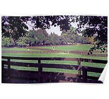 Equine Pasture Poster
