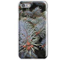 fir tree buds iPhone Case/Skin
