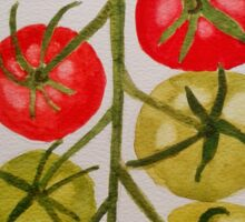 Tomatoes on the Vine Sticker