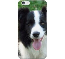 Ollie - time for a paws........!!! iPhone Case/Skin