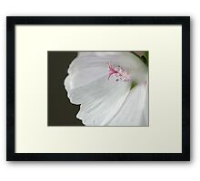 """Camera Shy"" - Rectangle Macro Colour Image of a Hollyhock flower Framed Print"