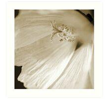 """Camera Shy"" - Square Macro Sepia Image of a Hollyhock flower Art Print"
