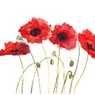 Red poppies watercolour by Monika Howarth