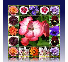 Sunshine and Showers - Summer Flowers Collage Photographic Print