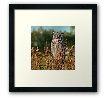 Great Horned Owl waiting for the sun to set Framed Print