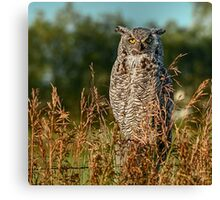 Great Horned Owl waiting for the sun to set Canvas Print