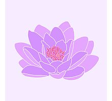 Purple Water Lily Photographic Print