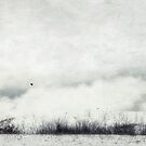 Drifting by Priska Wettstein