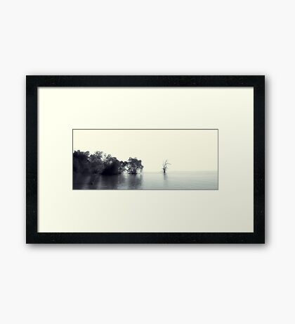 Mangrove Forest And Shallow Waters Framed Print