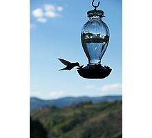 hummingbird Photographic Print