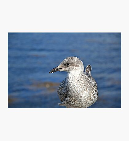 A Seagull's Life Photographic Print
