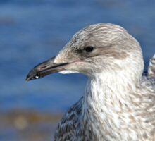 A Seagull's Life Sticker