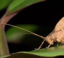 Leaf-mimic katydid, Peru Sticker