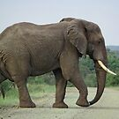 African Elephant by Ludwig Wagner