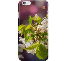 Cherry in bloom iPhone Case/Skin