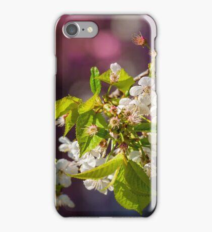 Cherry in bloom iPhone Case/Skin