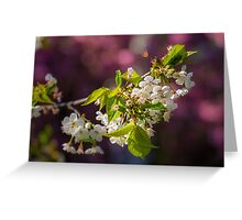 Cherry in bloom Greeting Card