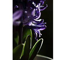 Pot plant. Photographic Print