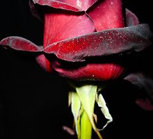 For you by Nuno Pires