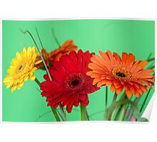 Gerberas in vase on a green background Poster