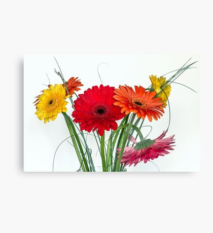 Many gerberas in white Canvas Print
