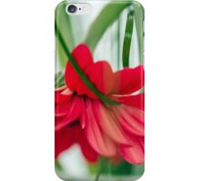 Withered gerberas iPhone Case/Skin