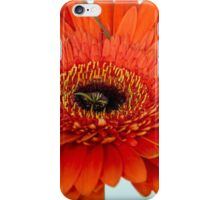 One red gerberas iPhone Case/Skin
