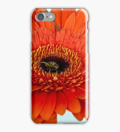 One red gerberas iPhone Case/Skin