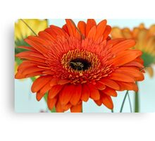 One red gerberas Canvas Print