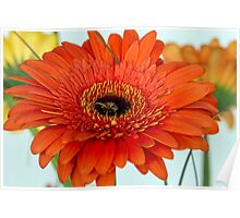 One red gerberas Poster