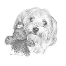 havanese dog & toy drawing by Mike Theuer