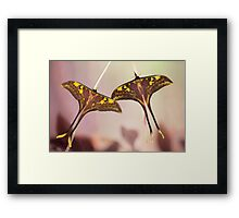 Isis males Framed Print