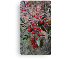 Frozen Holly Canvas Print